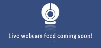 webcam traversetolo n. 48469